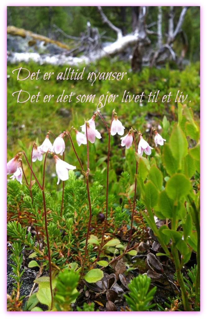 Blomst med tekst